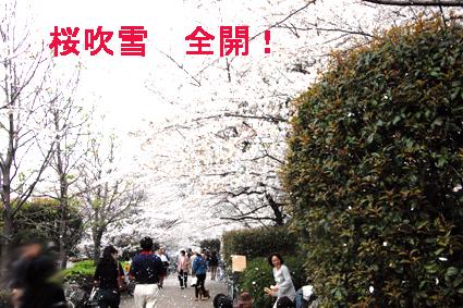 hanami-5.jpg