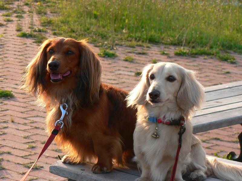 2008.06.09ダックン&ラル