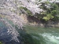 疎水の春2