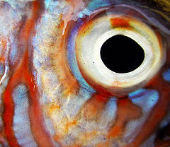 flickr: fish eyes