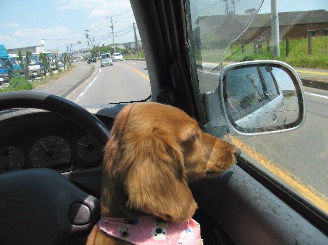 メイとドライブ