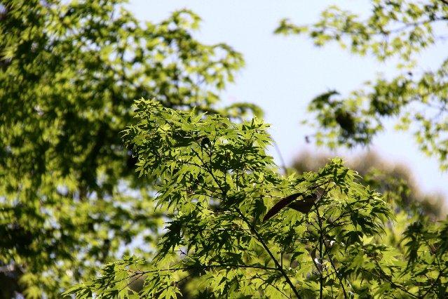 緑が綺麗2
