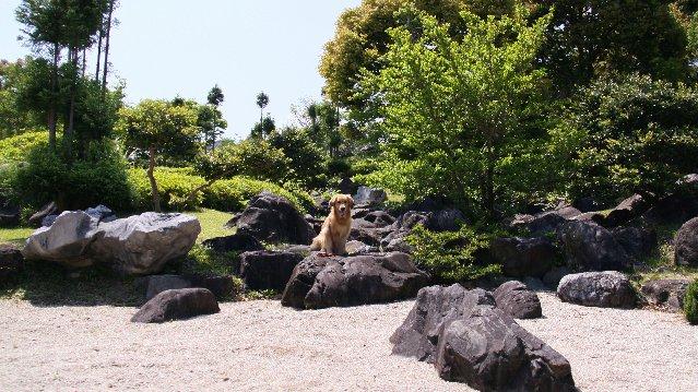 日本庭園と、なっちゃん