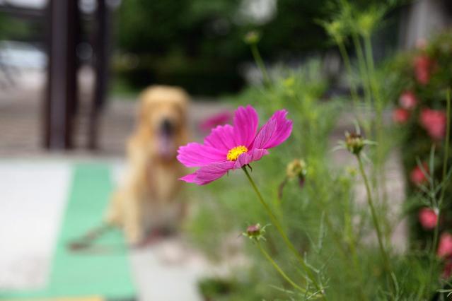 花とバックがなっちゃん