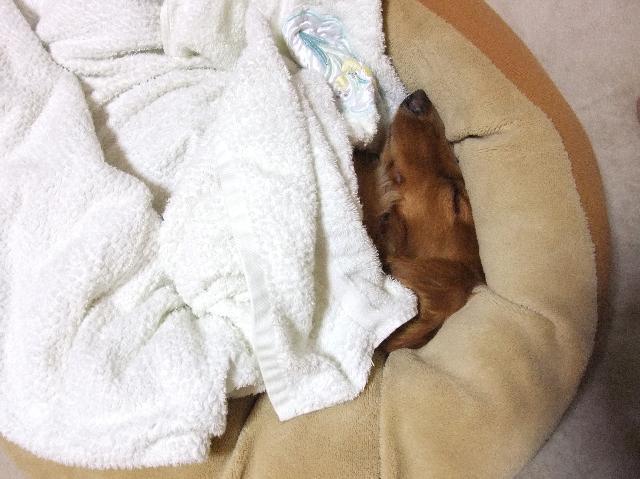 術後、おやすみ