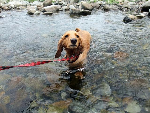メイ、川に入る