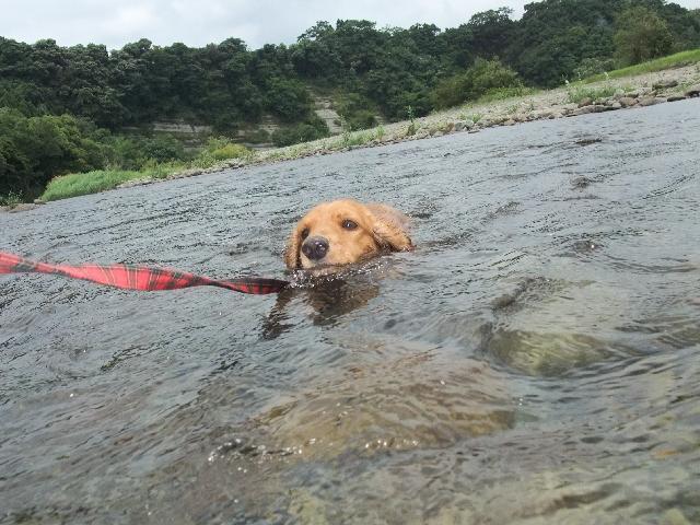 無理やり泳ぐ