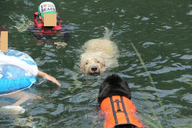 フィーリオ泳ぐ