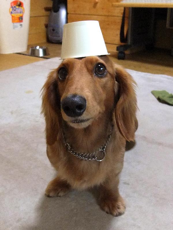 メイ、カップ帽子