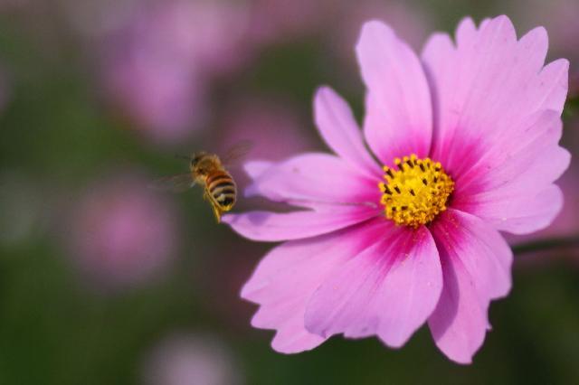 ハチ・アップ