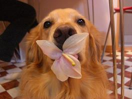 らいちと花1