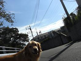散歩日和4