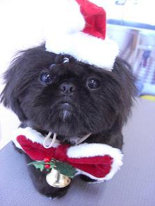 2008クリスマスOKI