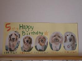 5月誕生日犬-a