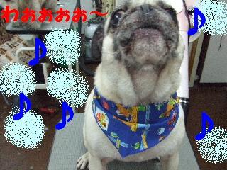 2008_02220012.jpg