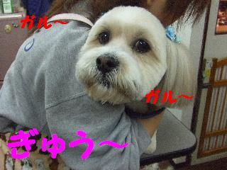2008_02220030.jpg