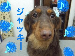 2008_02250017.jpg
