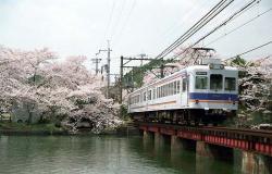大池遊園の桜