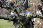 スズメたちの春