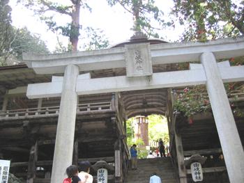 由岐神社の鳥居とご神木