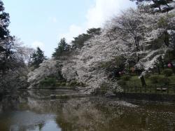 20070405桜