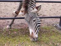 20080114_zebra.jpg