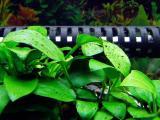 糸状藻と斑点状藻