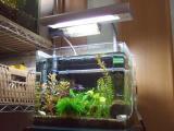 第二水槽(熱帯魚水槽)