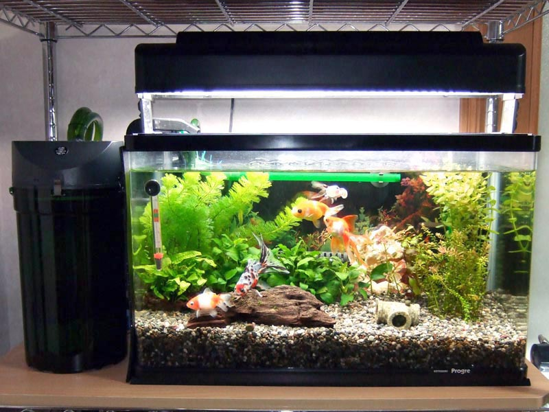 金魚水槽とエーハイム2215