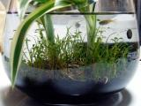 グラスアクアの水草