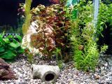 金魚水槽に引っ越した水草