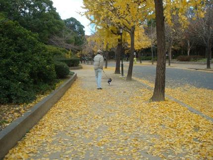 またまた大阪城1