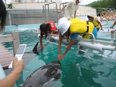 イルカはプールの端のほうに逃げているように見えます・・・