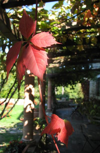 イタリア フィレンツェ カーサパルミラ 紅葉