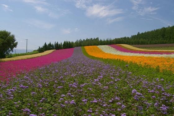 ファーム富田「彩りの畑」
