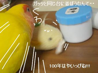 首ひよこ4