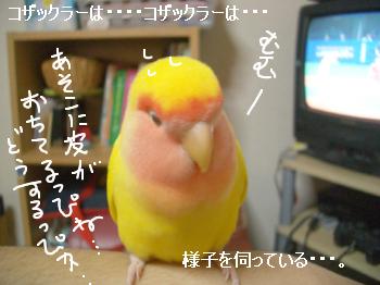 ちゅいくえ5