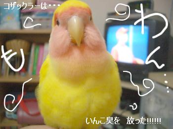 ちゅいくえ6