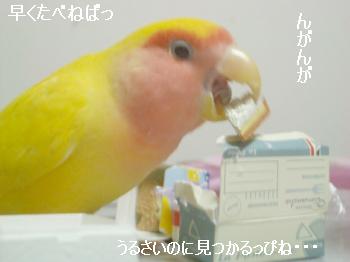 はこづめ4