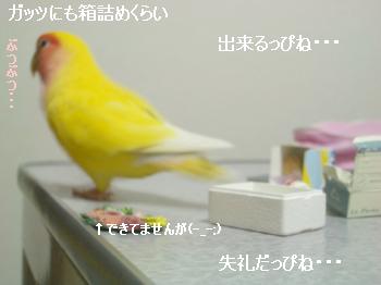 はこづめ5