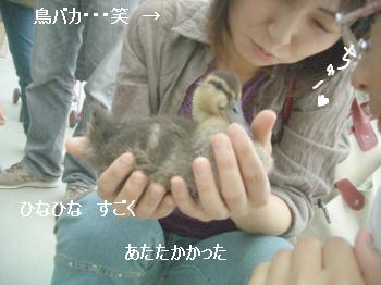 花鳥園11