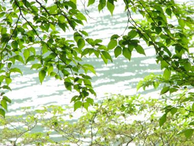 水面と新緑
