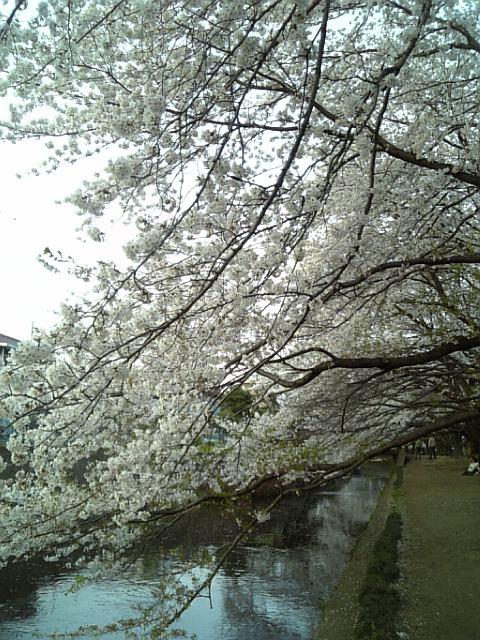 千本桜02