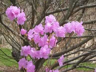 arboretum03.jpg