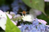 ミツバチ177