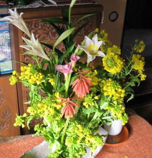 菜の花blog01