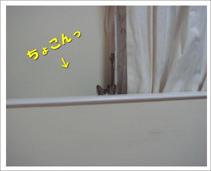 090130-1.jpg