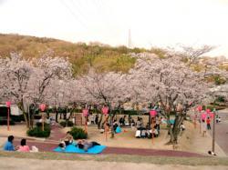 hanami2007_4