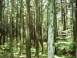 天竜の森①