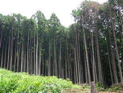 天竜の森②